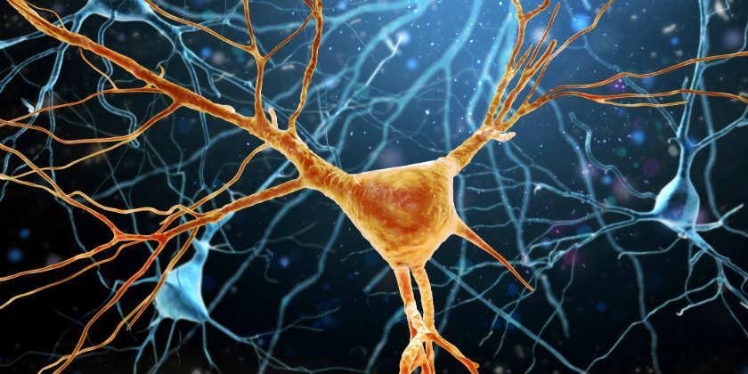COnexiones neuronales dañadas por ELA