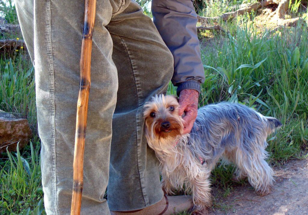 Hombre mayor con bastón se agacha pasa acariciar a su perro.